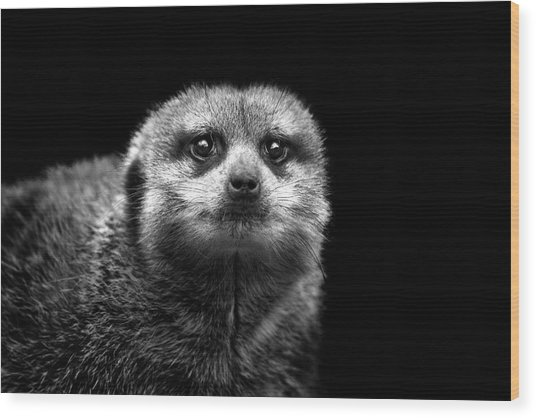 Portrait Of Meerkat Wood Print
