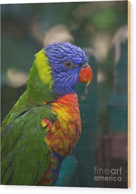Posing Rainbow Lorikeet. Wood Print