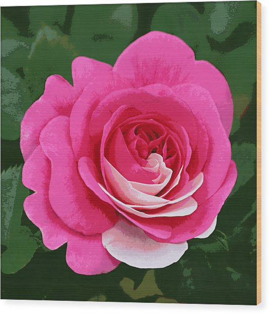 Poster Rose Wood Print by Jim Speirs