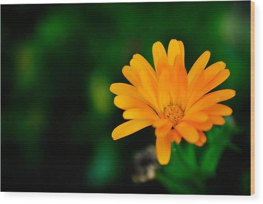 Pot Marigold Wood Print