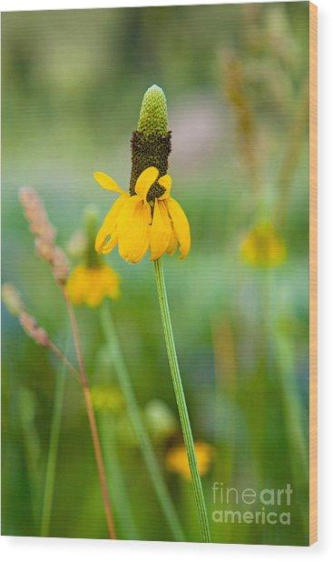 Prairie Coneflower Wood Print