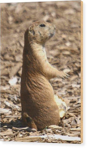 Prairie Dog Profile Wood Print by Western Roundup