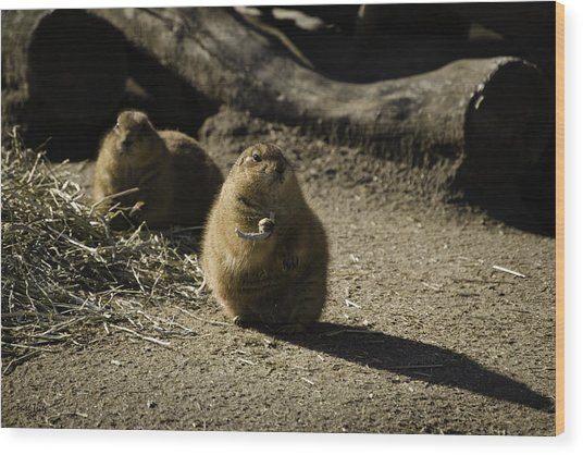 Prairie Dog Sees The Shadow Wood Print