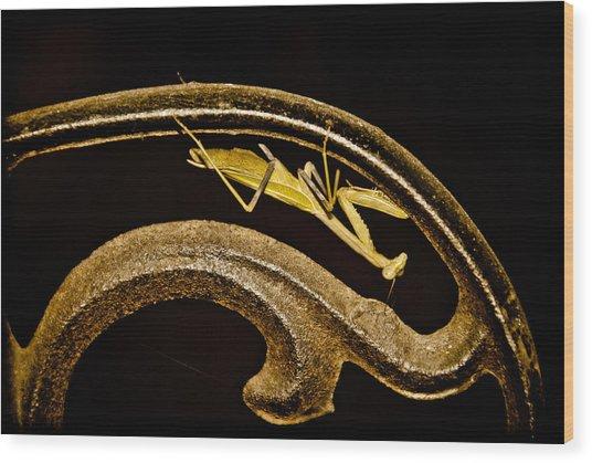 Albuquerque, New Mexico - Prayer Scroll Wood Print