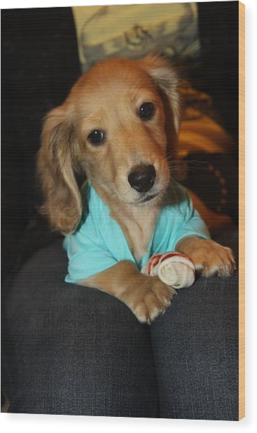 Precious Puppy Wood Print
