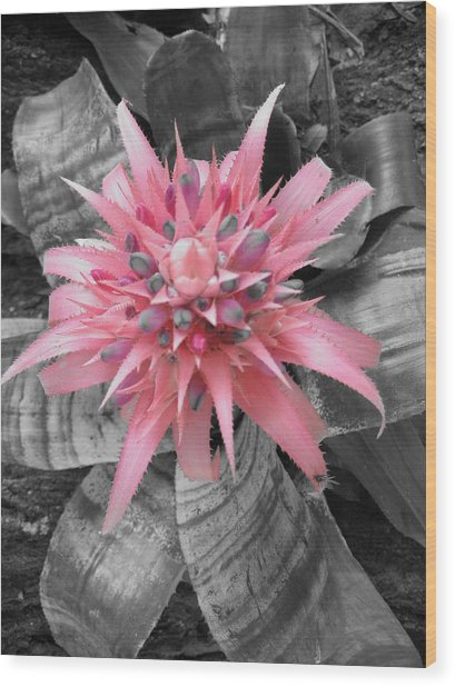 Pretty Bromeliad Wood Print by Carrie Munoz