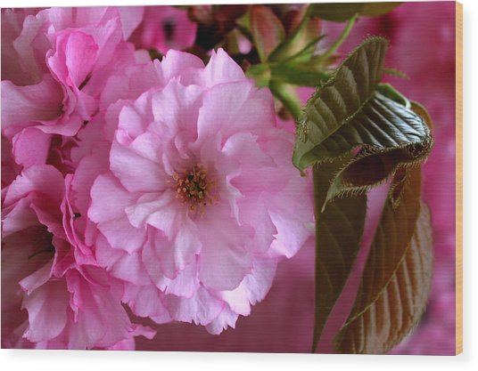 Pretty In Pink Blossom Wood Print