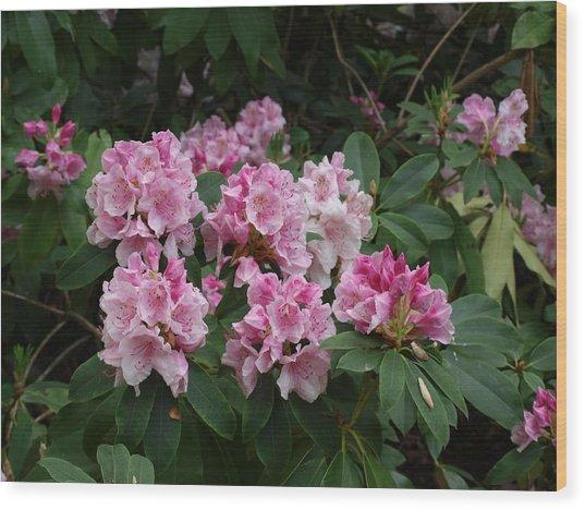 Pretty In Pink Wood Print by Larry Krussel