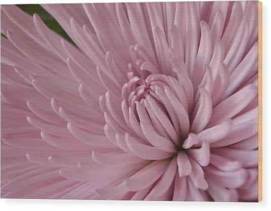 Pretty In Purple 2 Wood Print
