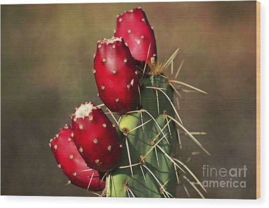 Prickley Pear Fruit Wood Print