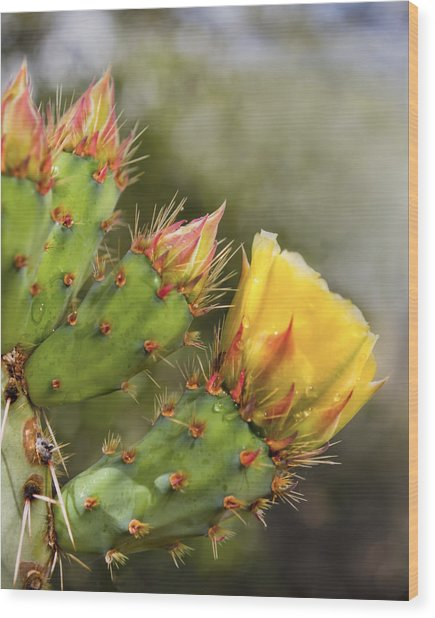 Prickly Pear Flowers Wood Print