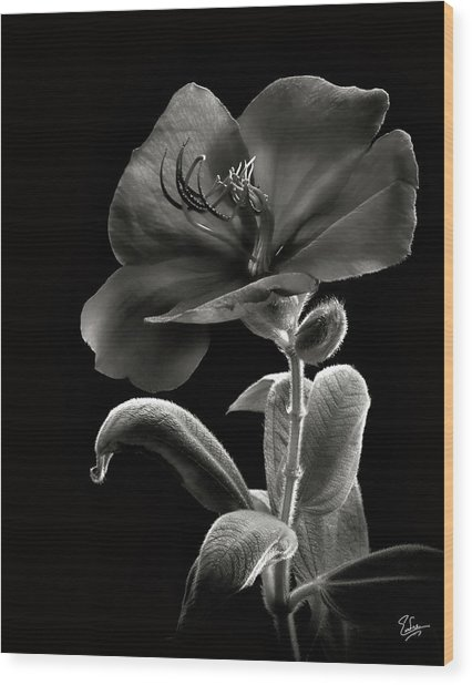 Princess Flower In Black And White Wood Print