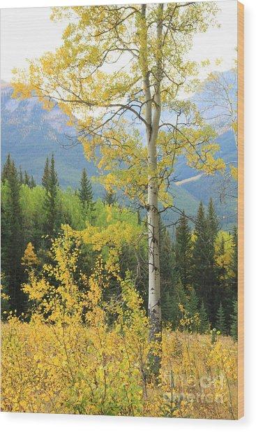 Proud Aspen Wood Print