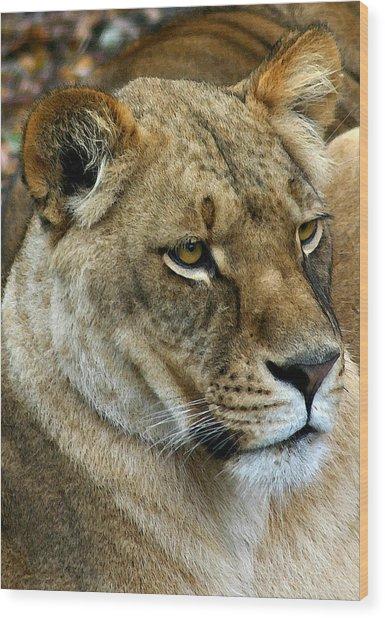 Proud Lioness Wood Print