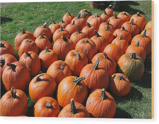 Pumpkins Galore Wood Print