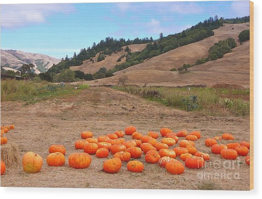 Pumpkins Of Marin Wood Print