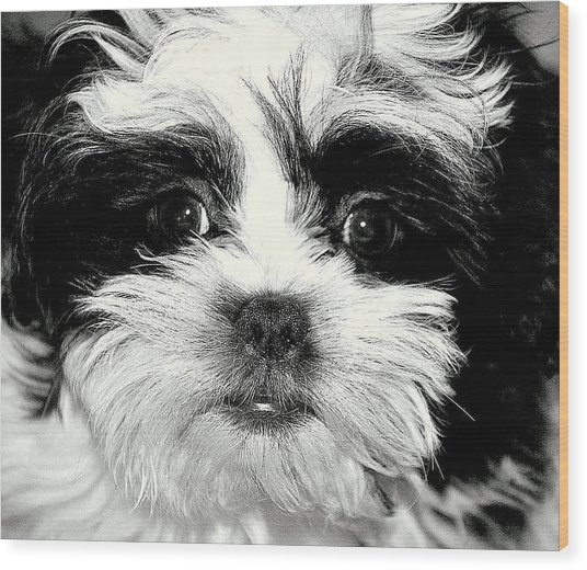 Puppy Love Wood Print by Antonia Citrino