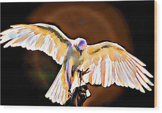 Pure Whtie Raptor Wood Print by Carrie OBrien Sibley