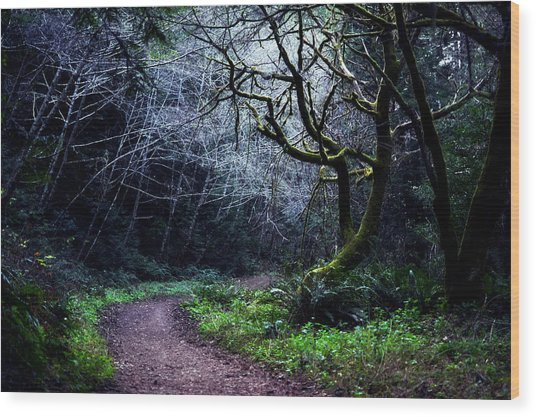 Purisima Creek Trail Wood Print