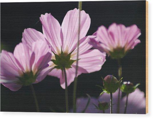 Purple Cosmos Wood Print