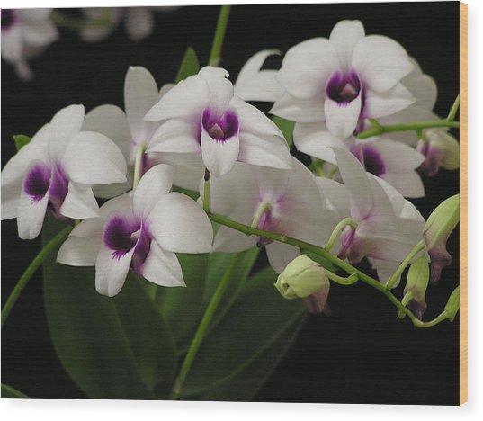 Purple Dendrobium Stem Wood Print by Andrea Drake