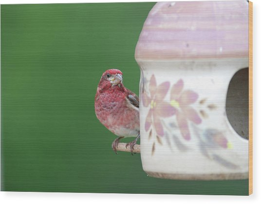 Purple Finch At Feeder Wood Print