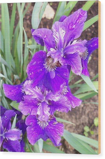 Purple Iris With Water Droplet Wood Print