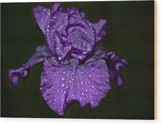 Purple Iris With Water Drops Wood Print