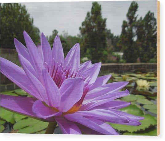 Purple Lotus Flower Wood Print