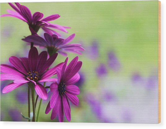 Purple Love Wood Print by Penny Haviland