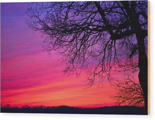 Purple Majesty Wood Print by Brenda Becker