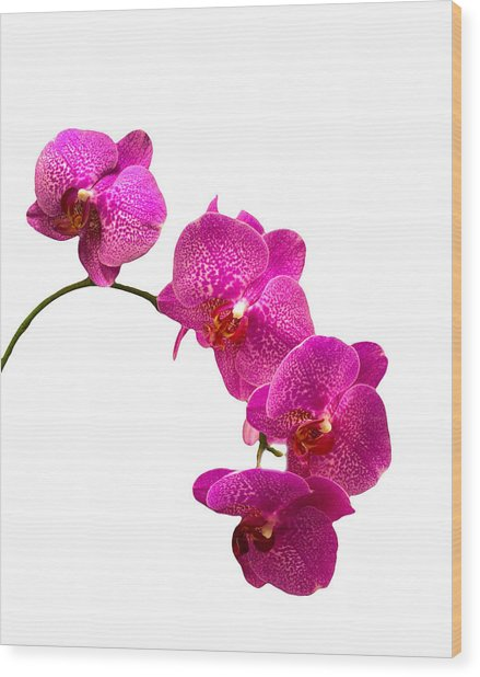 Purple Orchid On White Wood Print