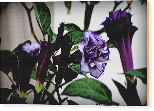 Purple People Eater Trumpet Flower Wood Print by John Wright