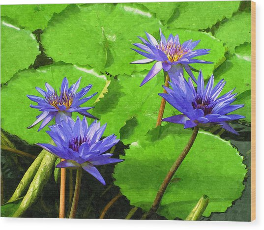 Purple Water Lilies Wood Print by Design Windmill