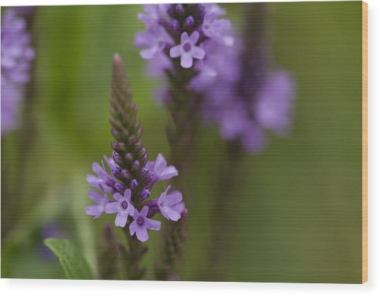 Purple Wildflower Wood Print by Dean Bennett