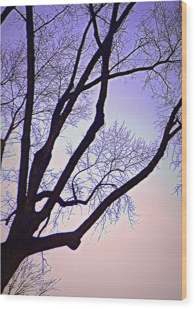 Purpler Branch Wood Print by Dan Stone