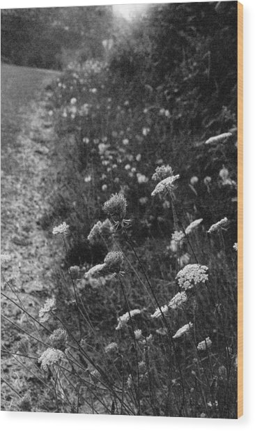 Queen Anne's Lace On Beachcrest Drive In Neskowin Oregon Wood Print by Christina Weber