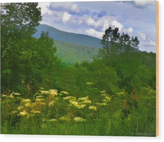 Queen Anne's Lace With A View Wood Print