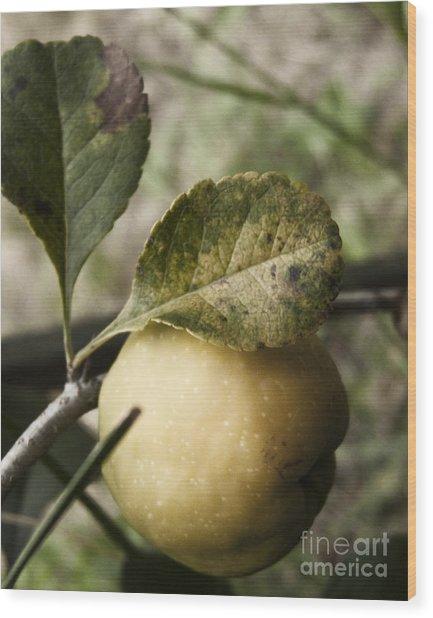 Quince Fruit Wood Print by Agnieszka Kubica
