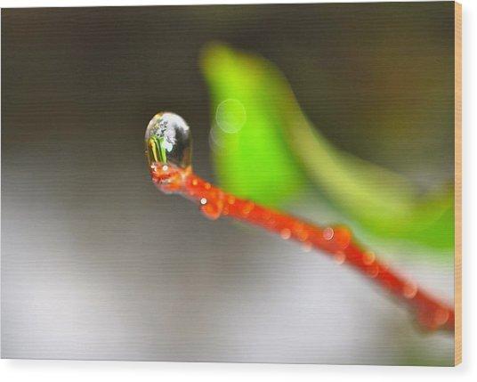 rain drops Tiny Wonder Wood Print by Gloria Warren