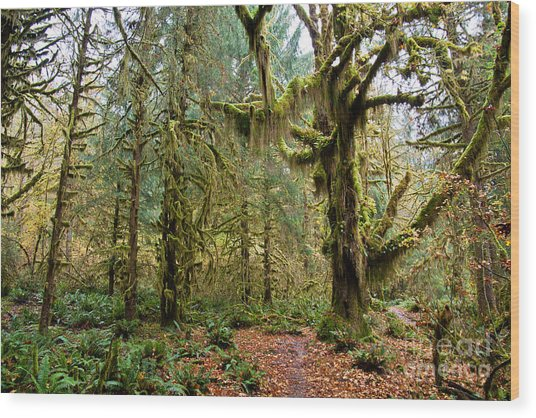 Rain Forest In Fall Wood Print