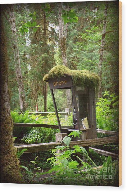 Rain Forest Telephone Booth Wood Print