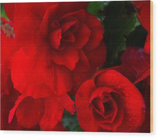 Rain Kissed Roses Wood Print