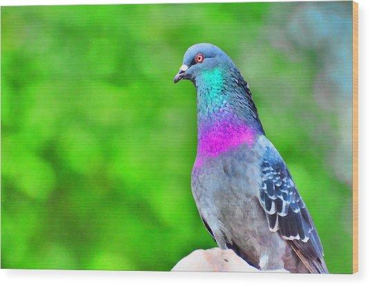 Rainbow Pigeon Wood Print