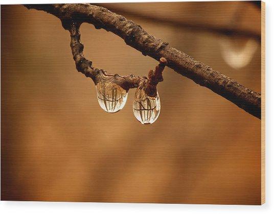 Raindrop Reflection Wood Print
