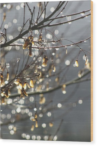Raindrops And Leaves Wood Print