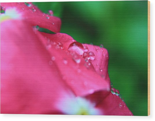 Raindrops On A Flower I Wood Print