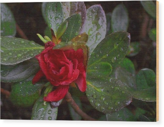 Rainy Day Rose Wood Print by Wide Awake Arts