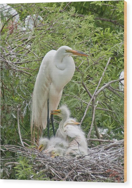 Raising Egrets Wood Print