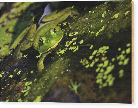 Rana Clamitans Or Green Frog Wood Print